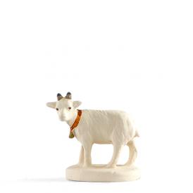 Chèvre 'blanche'